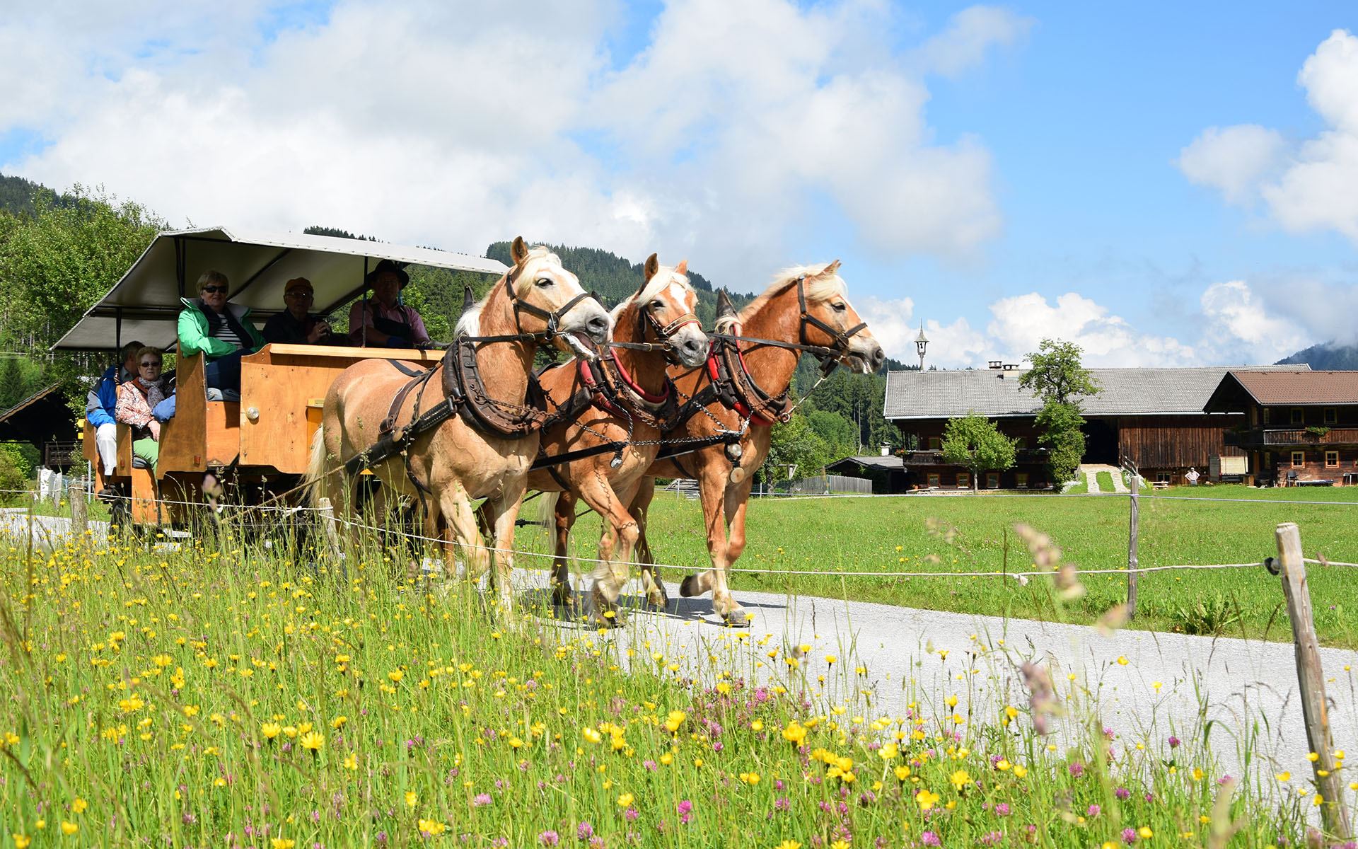 pferde1_1920x1200